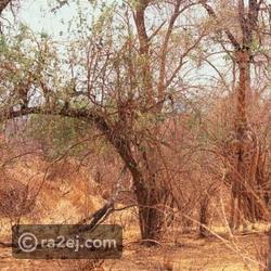 هل يمكنك العثور على جميع الحيوانات في هذه الصور رائج