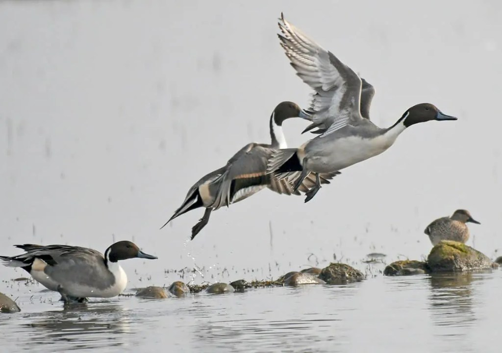 birding tour in himachal pradesh