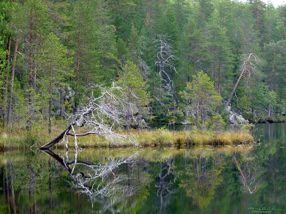 Erämaajärvi - Olli Nylander