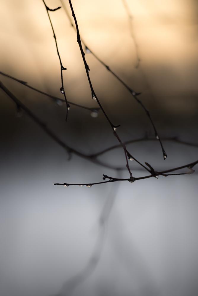 Silver Tears - Pekka Mehtälä