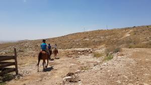Tekoa Horse Farm