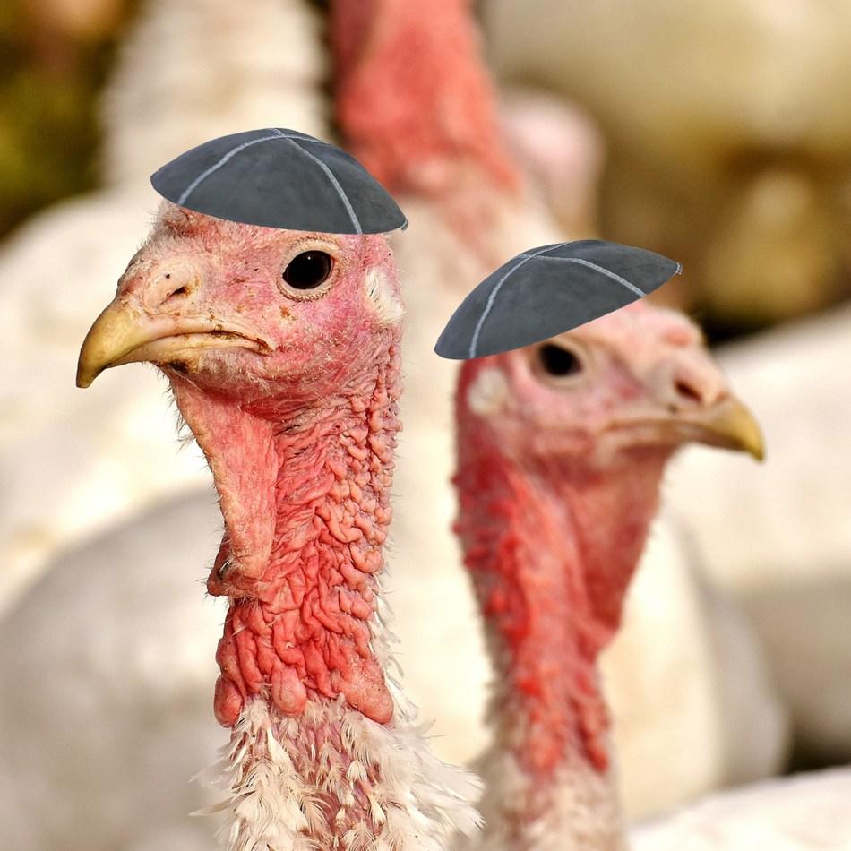 turkeys with kippas on their heads