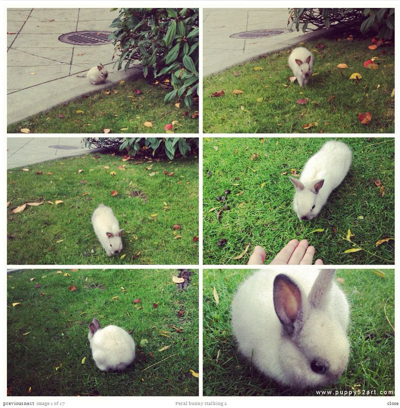 feral-bunny-stalking-2-white-capture