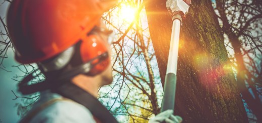 How Much Does It Cost to Remove a Tree From Your Yard?