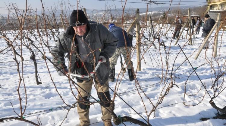 15. ročník súťaže v reze viniča v Rači
