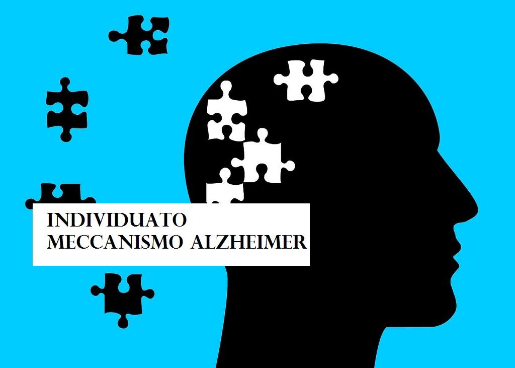 Individuato meccanismo Alzheimer