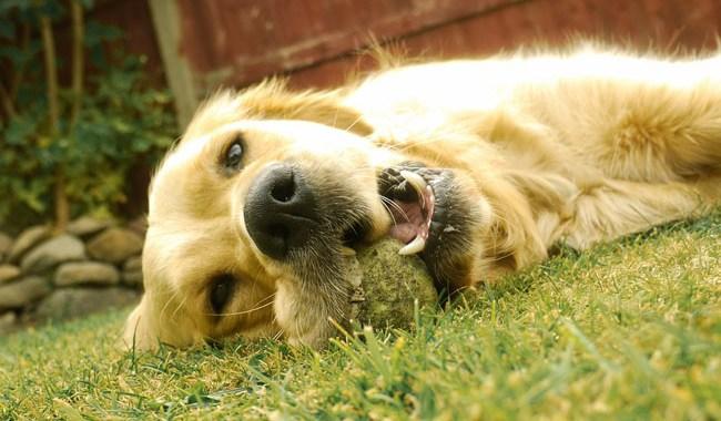 Cinque falsi miti sui cani