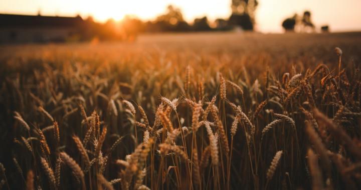 Alphabet X: una produzione alimentare sostenibile