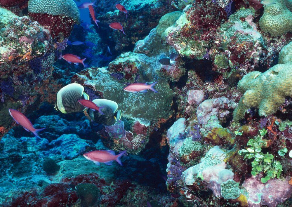 Barriera Corallina severamente a rischio