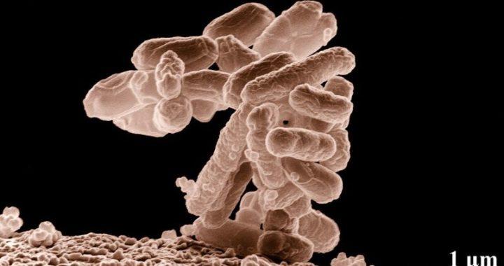 Antibiotico Resistenza: adattamento all'esposizione