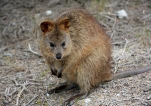 Adelaide - Kangaroo Island.jpg