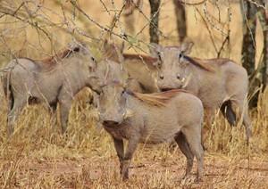 Selous Game Reserve.jpg