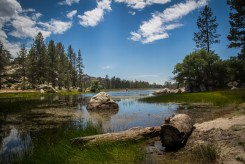 baja-pine-forrest-trail-of-missions-2017-harroldphoto-04
