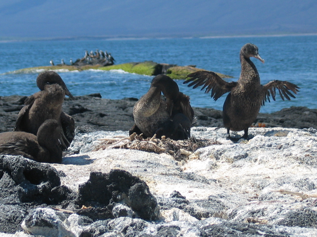 Ecological Equivalents Galapagos Islands Vs Race Rocks