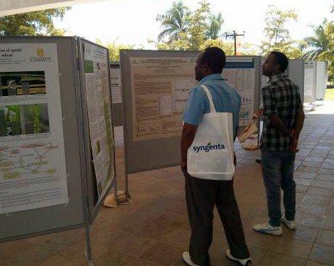 Viewing poster presentations at Borlaug100
