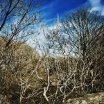 #MySundayPhoto - Blue Skies