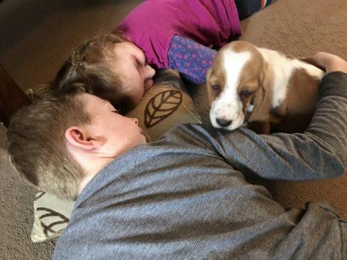 The Dog Blog - Meet Maisy