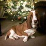 #MySundayPhoto - Maisy's First Christmas