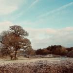 #MySundaySnapshot - Winter Woodland 2/52 (2019)
