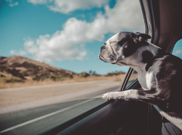 15 Things Every Dog Needs In Order To Be Happy