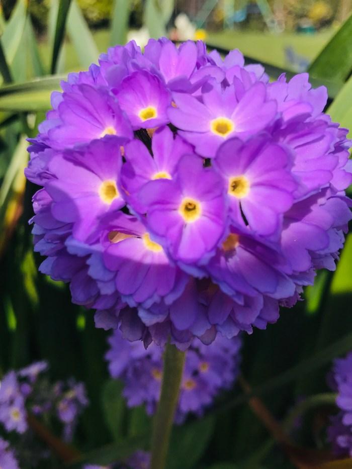 #MySundaySnapshot - Spring Is In Bloom 14/52 (2019)