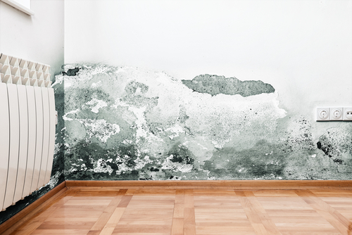 #WOWW – Wipe Out Wet Walls – Keep Small Ones Safe from Damp