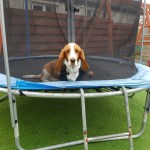 #TheOrdinaryMoments - The Bouncing Basset