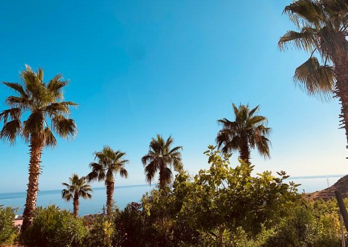 #MySundaySnapshot - Underneath The Palm Trees 33/52 (2019)