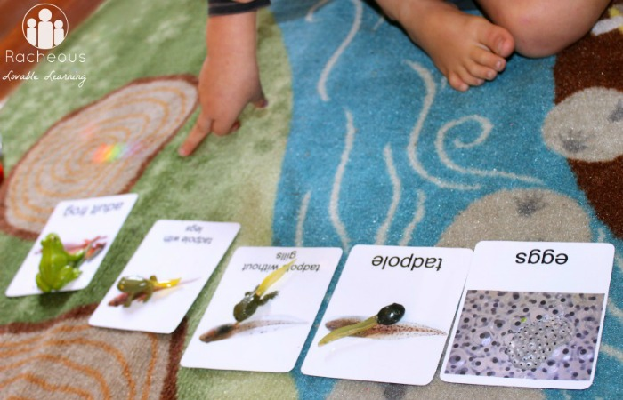 frog life cycle figurines play cards printable