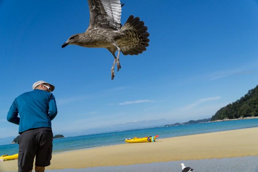 Angriff im Abel Tasmen national Park