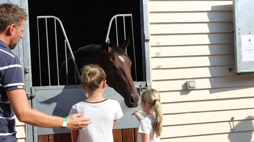 Racing Welfare Open Day - visitors meeting the equine stars