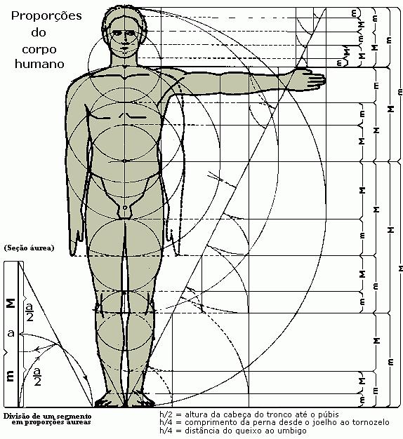 Fibonacci e Phi nas proporções do corpo humano - divisão de um seguimento em proporções aureas