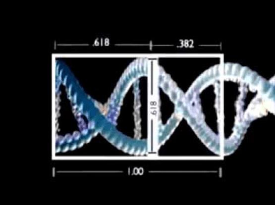 Fibonacci no D.N.A