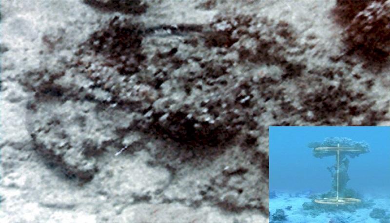 Roda e Eixo da charrete cobertos por corais. Êxodo 14:25 - Fez que as rodas dos seus carros começassem a soltar-se, de forma que tinham dificuldades em conduzi-los.