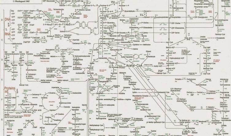 O complexo mapa metabólico humano