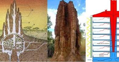 Biomimética - o design e arquitetura complexa dos cupinzeiros inspiram construções sustentáveis