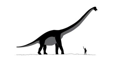 Dinossauros e humanos viveram juntos? Existem evidências disso?
