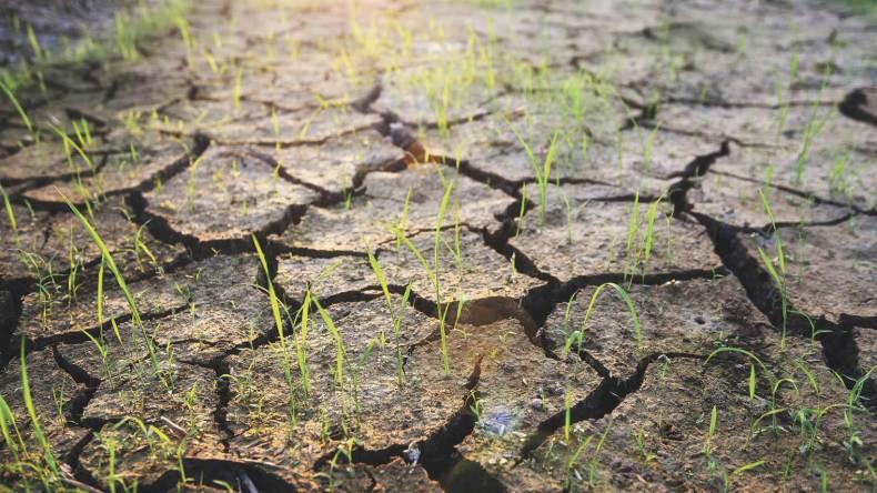 cracked desert ground with grass