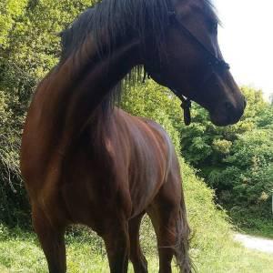 Άλογο 5 ετών