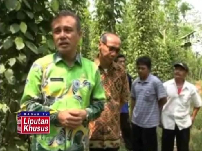 PEMKAB dan DISHUTBUN Siap Sejahterakan Petani Lada di Lampung Timur