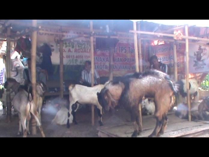 Pedagang ternak akui kenaikan omset penjualan