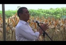 Menteri Pertanian Pastikan Harga Jagung di Lampung Naik