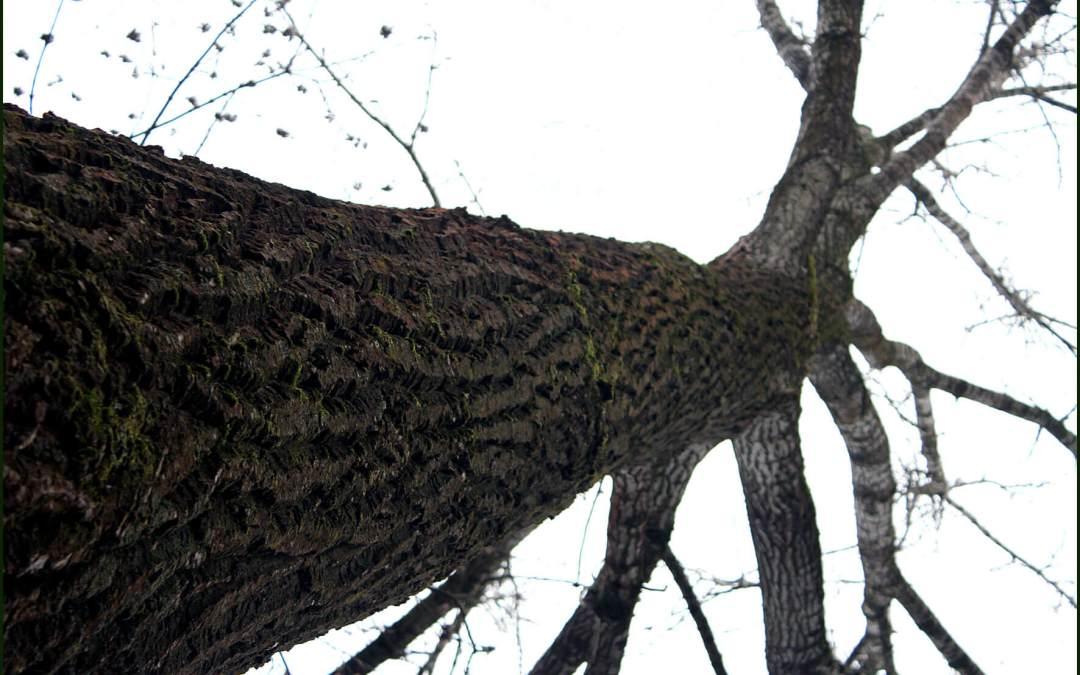 Die Stille der Bäume