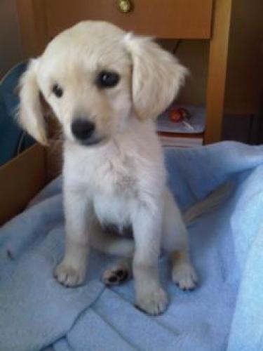 hund-christo