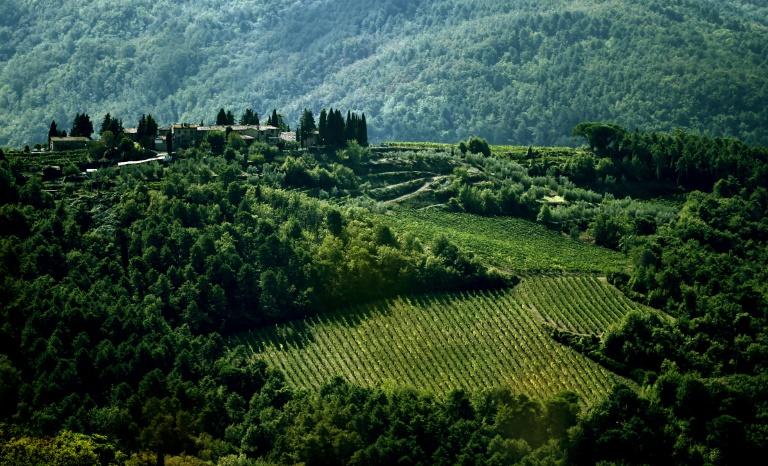 Le vignoble de Greve in Chianti, près de Florence. Dans la région du Chianti, la première appellation contrôlée a vu le jour il y a 300 ans. © AFP