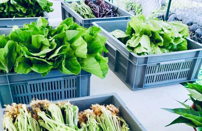 local farms fruits legume (5)