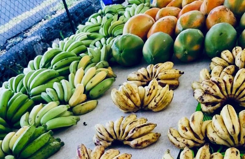 local farms fruits legume (7)