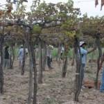El sector vitivinícola puede deducir aportes sociales