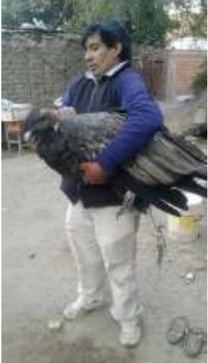 0 condor andino cafayate 1
