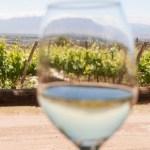 Se daría marcha atrás con el impuesto al vino